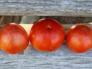 Basrawya-Tomato-web