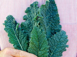 cabbage-nero-di-toscana