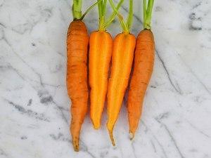carrot-nantes-scarlet