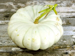 Flat-White-Boer-squash