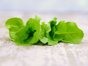 lettuce-buttercrunch
