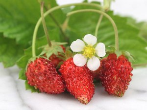 Red-Wonder-Strawberry-web