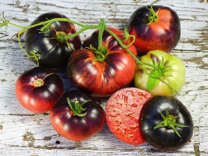 tomato-blue-beauty