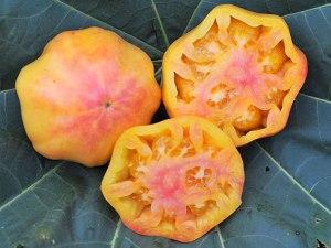 tomato-mary-robinsons